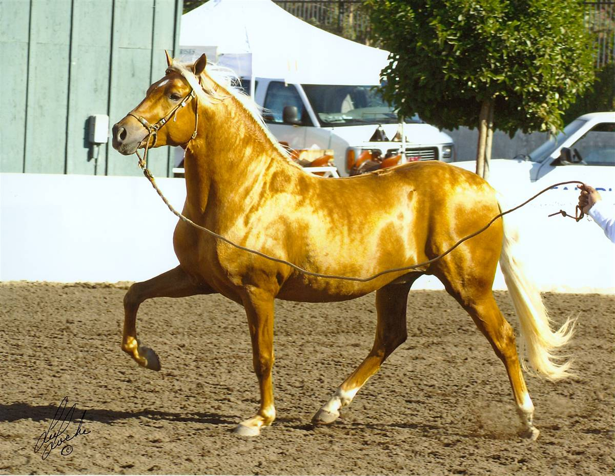 Amazing-Golden-Horse-Wallpaper