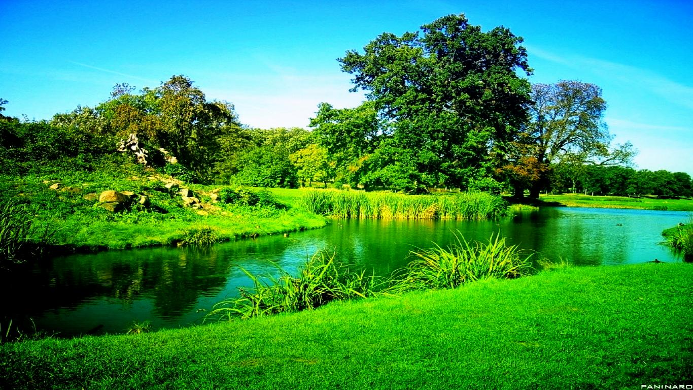 Green-tree-over-water-download-free-widescreen-hd-green-tree-over