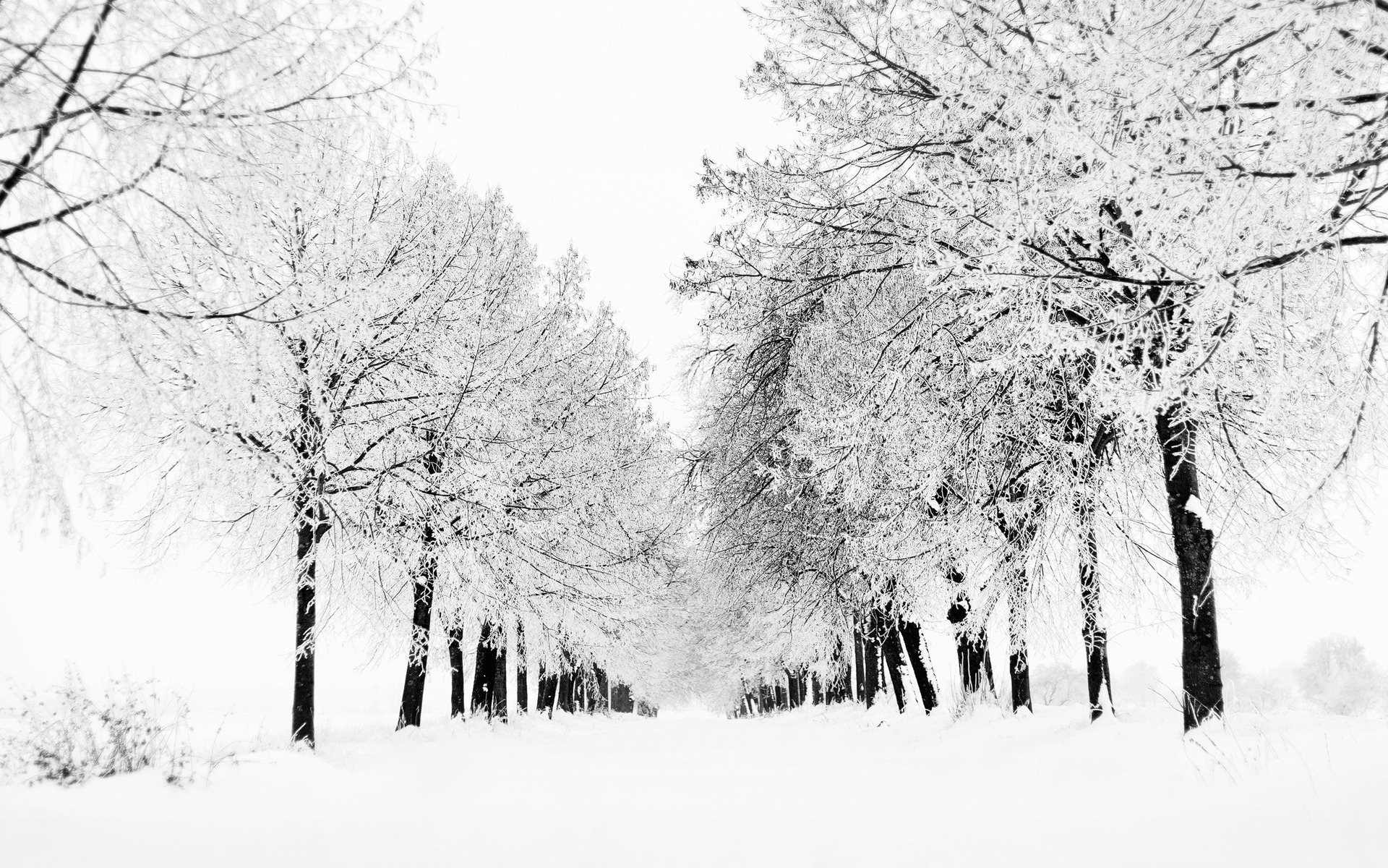 Black And White Winter wallpapers (51 Wallpapers) – HD ...
